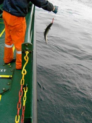 Fiske vid Kinnarodden (10)